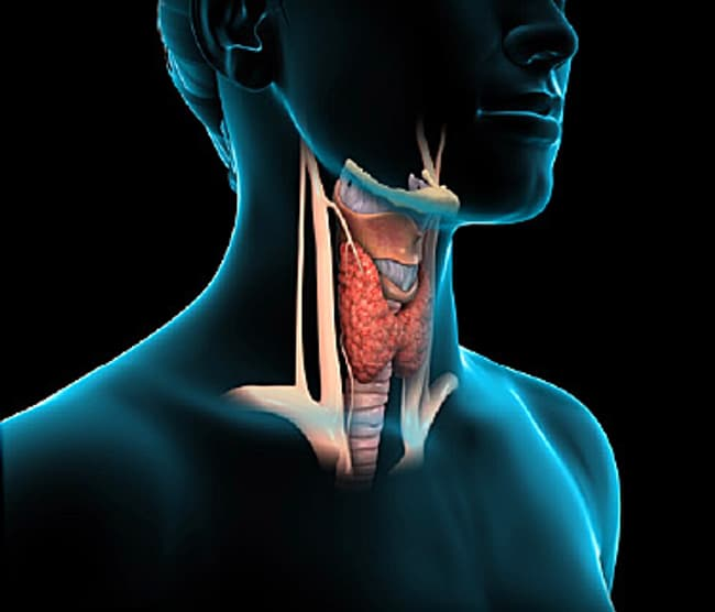 Thyroid Video What Does The Thyroid Do For You
