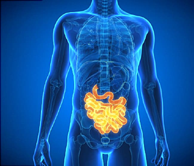 Video Unravel 5 Facts About Your Intestines